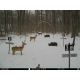 ForestCam LS-177