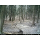 ForestCam LS-870